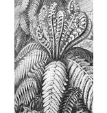 IXXI from Victoria and Albert Museum - by Ernst Haeckel