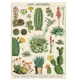 Cavallini Vintage School Poster Cacti & Succulents