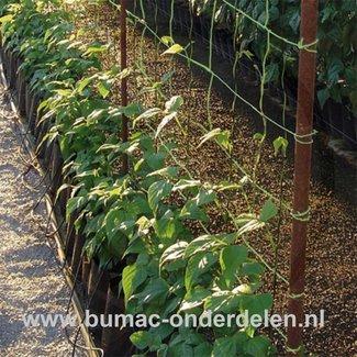 Ondersteuningsnet, 2 x 5 Mtr, Maaswijdte: 20 x 20 cm, groen, Biedt optimale ondersteuning, horizontale toepassing bij liggende planten en verticale toepassing bij hoog opkomende planten zoals bessen  Materiaal: UV-gestabiliseerd polyethyleen,  groen, klim