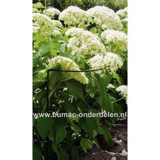 Plantensteun, struiksteun halfrond, 70 cm, x 40cm Ø 5 mm, groen Halfronde steun voor struiken of vaste planten, Gemaakt van weerbestendig rond staal, Bedekt met groene polyester lak. Ter ondersteuning van vaste planten of struiken.