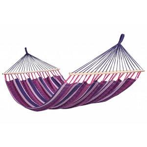Tropilex Purple