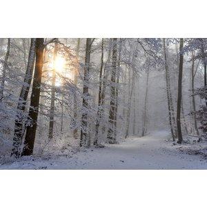 Wellnesskadoos Cadeaupakket Sauna opgiet geur: 5x Winter 30 ml