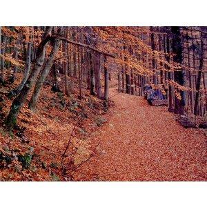 Odeur de Vie Etherische olie Mix Relax & Forest 20ml