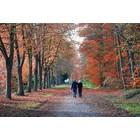 Odeur de Vie Etherische olie Mix Forest Walk 20ml