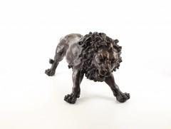 Producten getagd met african lion