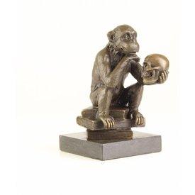 Chimpanzee holding a skull