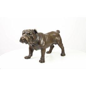 An English Bulldog