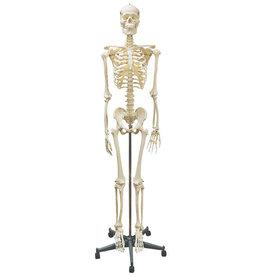 Servoprax Homo Skelett