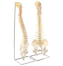 Servoprax Flexible vertebral column