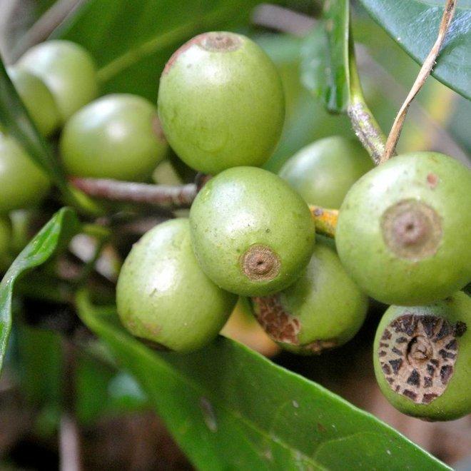 Koffiescrub Biologisch / Werfzeep Scrub 100gr