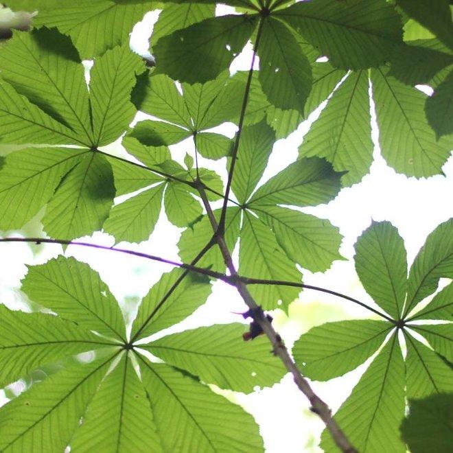 Scheerzeep - Biologische en Handgemaakt 100 gr