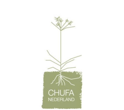 Chufa