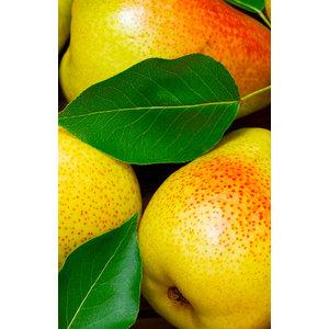 FiordiFrutta Fruitspread Peer - 250g - BIO