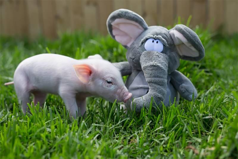 Een knuffel is het beste medicijn voor deze dieren