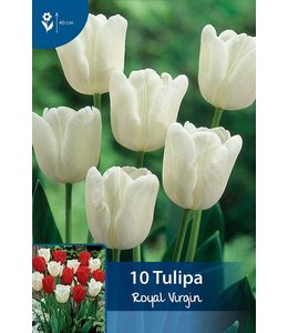 Tulpen Royal Virgin