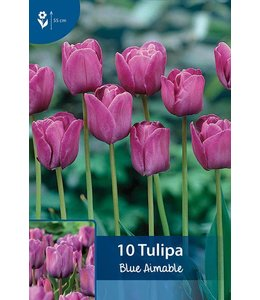 Tulp Bleu Aimable