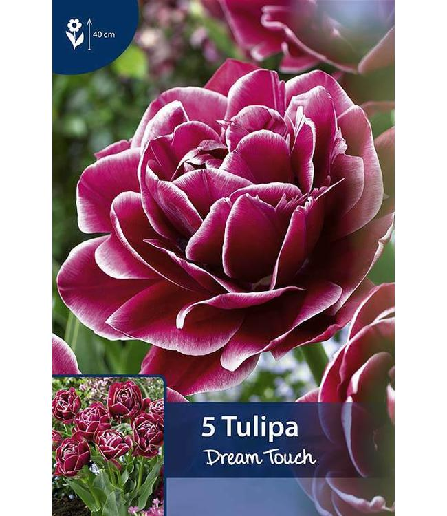 Tulp Dream Touch