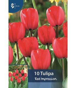 Tulpen Red Impression