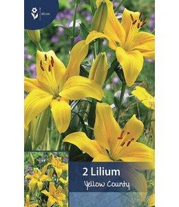 Lelie Yellow County