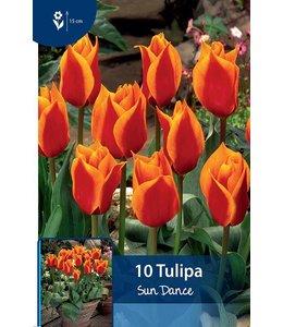 Tulip Sun Dance