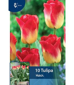 Tulp Match