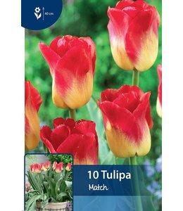 Tulpen Match