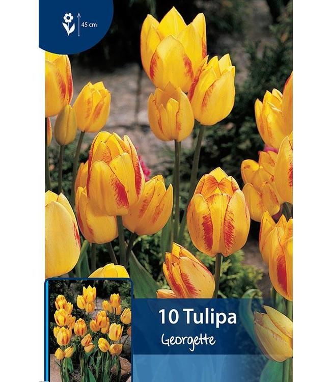 Tulip Georgette