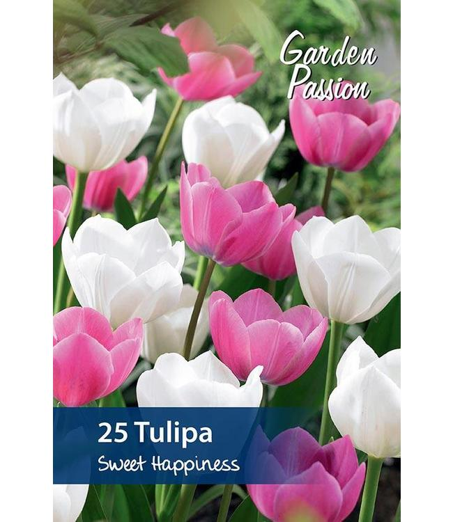 Tulip Sweet Happiness
