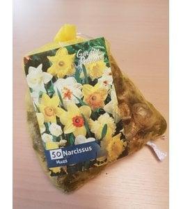 Daffodils Mixed