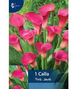 Calla Pink jewel (Zantedeschia)