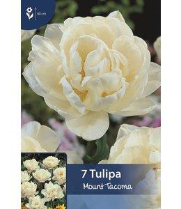 Tulip Mount Tacoma
