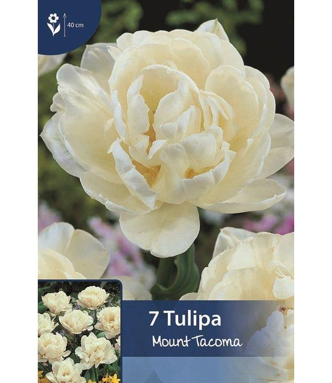 Tulp Mount Tacoma