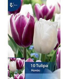 Tulip Mambo