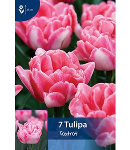 Tulpen Foxtrot