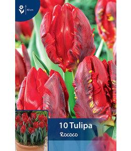 Tulpen Rococo