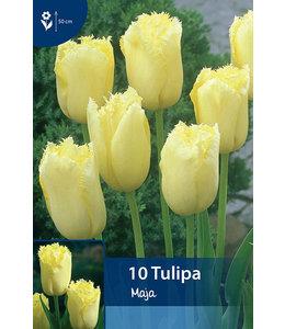 Tulpen Maja