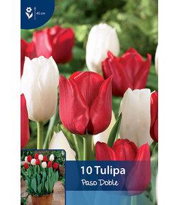 Tulip Paso Doble