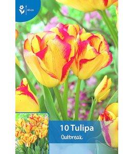 Tulp Outbreak