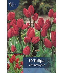 Tulp Red Georgette