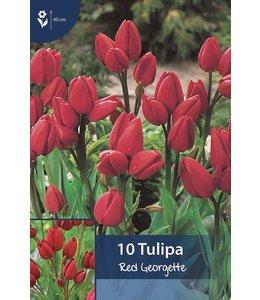 Tulpen Red Georgette