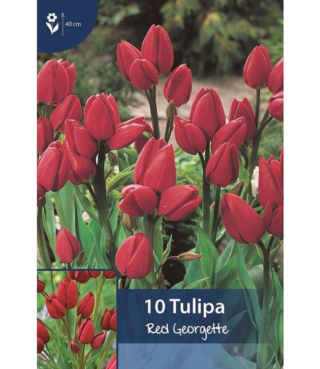 Tulip Red Georgette
