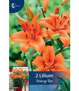 Lily Orange Ton