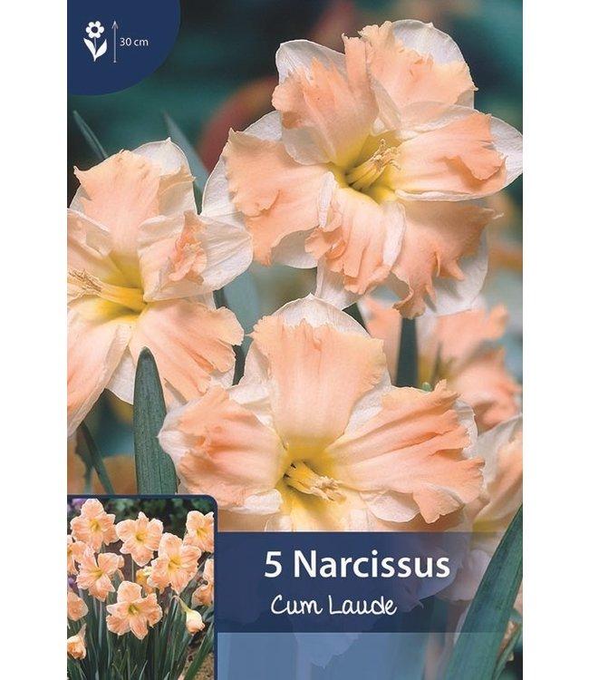 Narcissus Cum Laude