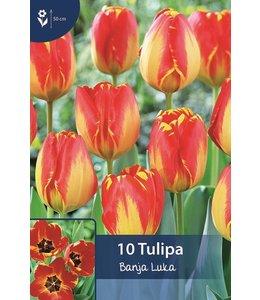 Tulpen Banja Luka