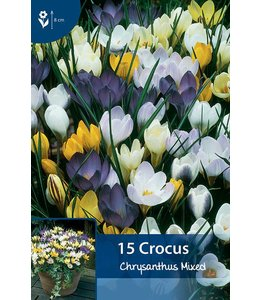 Crocus Mixed Chrysanthus