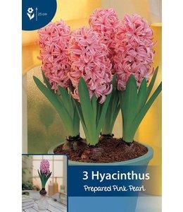 Hyazinthen präpariert Pink pearl (für im Haus)