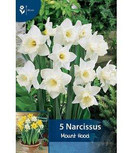 Narcis Mount Hood