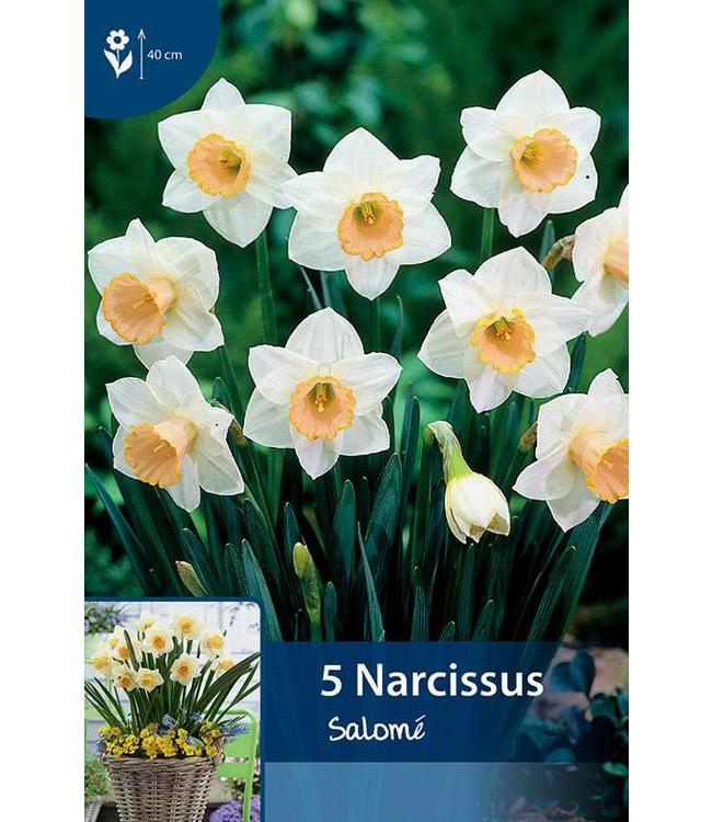 Narcissus Salomé
