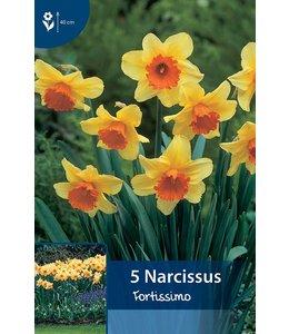 Narcis Fortissimo