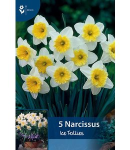 Narcis Ice Follies